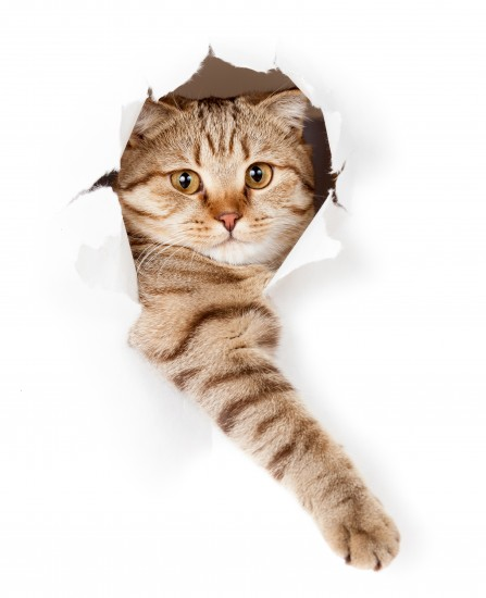 kot w rozdartym otworze białej tapety