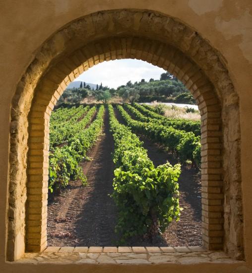 łukowate ceglane okno z widokiem na winnicę