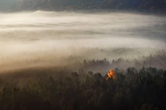 Mglisty las. Samotne jesienne drzewo we mgle