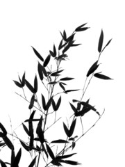 Bamboo Tree and Branches