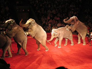 elephants at circus
