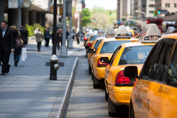 Taxischlange New York