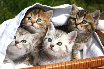 4 kleine Stubentiger