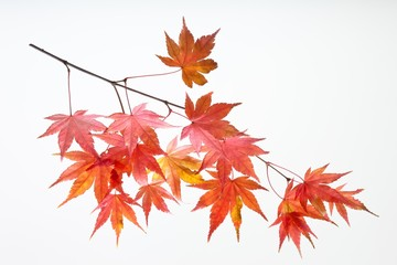 fallen_leaves_180