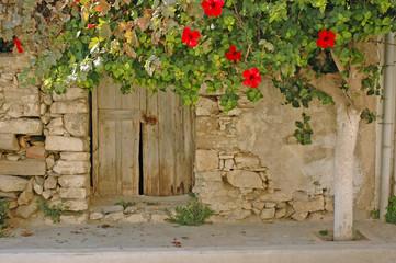 Hibiskus an einem Haus in Mirtos, Kreta
