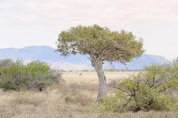 Karoo scene,Blouboskuil,Graaff Reinet,south Africa