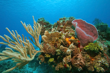 Variety of Corals and Sponges on a Coral Reef - Cozumel