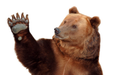 Bear welcomes you and waving his paw