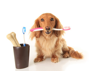 Dog and tooth brush