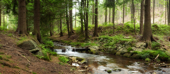 mountains river in forest