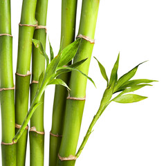 Bamboo and bamboo leaf on white background