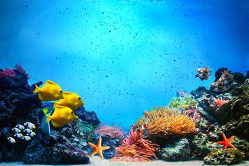 Underwater scene. Coral reef, fish groups in clear ocean water