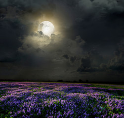 Lavender field in the moonlight
