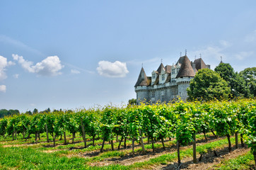 France, vineyard and the castle of Monbazillac in Dordogne