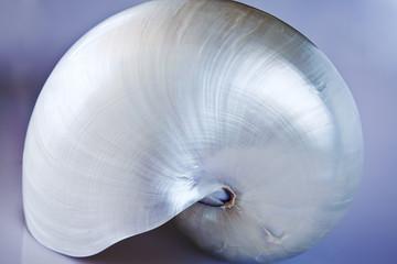 Nautilus con blue bcakground.