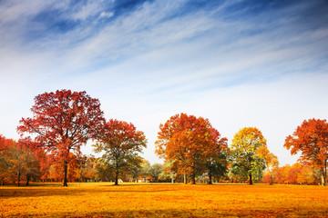 Autumn trees landscape, fall season
