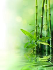 bamboo stalks on water - blurs