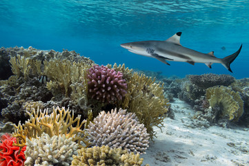Colorful underwater coral reef with yellow stripped fish and big