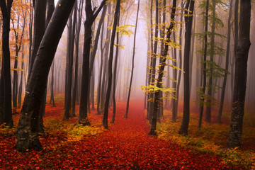 Mysterious foggy forest with a fairytale look
