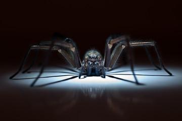 huge spider in ambush