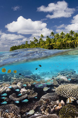 Tropical Reef - Cook Islands - South Pacific
