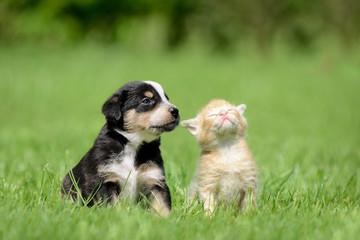 Hund Katze Freunde
