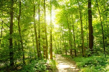 Einladung zum Träumen: Wald mit Morgensonne :)