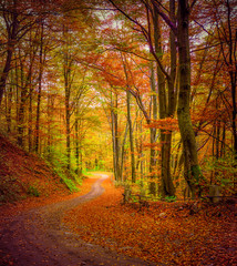Dark forest road in the autumn forest.