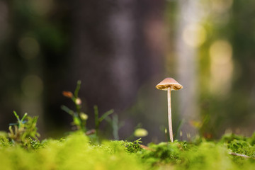 Small mushroom at forest floor during autumn