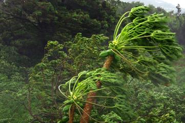 Vent cyclonique à la Réunion