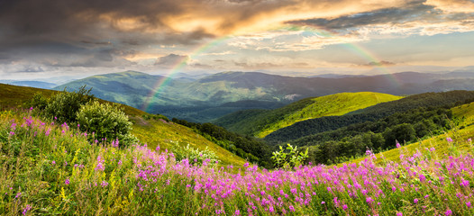 wild flowers on the mountain top