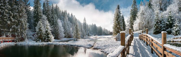 Зимний лес в Карпатах