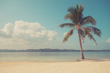Vintage filtered palm tree on tropical beach