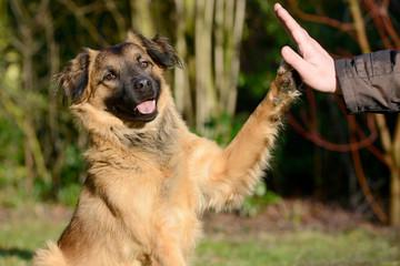 Hund gibt Pfote
