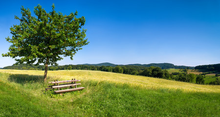 Grüne Landschaft mit blauem Himmel und Parkbank