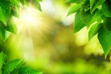 Natur Hintergrund umrahmt von Blättern