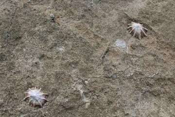 Muscheln an einem Felsen