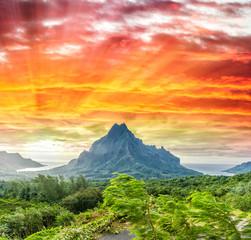 Mountains and vegetation of Polynesia