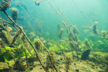 Underwater river landscape with little fish