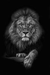 King Lion