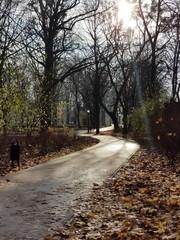 Kręta droga w parku