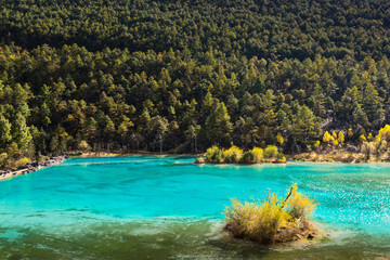 Isolated island with yellow shrub in turquoise lake and green pine forest background in Blue moon vallage national park, Lijiang, Yunnan, China