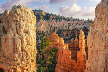 Bryce Canyon - Late evening on the Fairyland Loop Trail