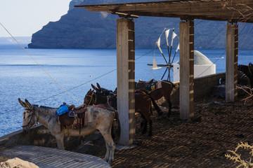 Donkeys and a windmill