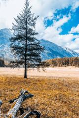 Autumn Scenery of Spruce Pine in Jade Dragon Snow Mountain, Lijiang, Yunnan, China