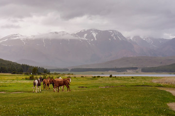 Scenic view of Wild horses grazing on a meadow near a lagoon against Andes mountains range in Esquel, Patagonia, Argentina.