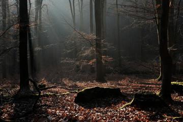 Buchen Wald Herbst Winter
