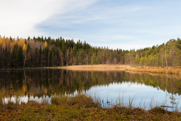Forest lake landscape at cloudy autumn day