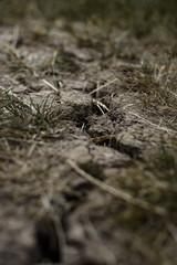 Drought crack in soil