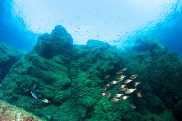 Underwater scenery. Mediterranean sea.